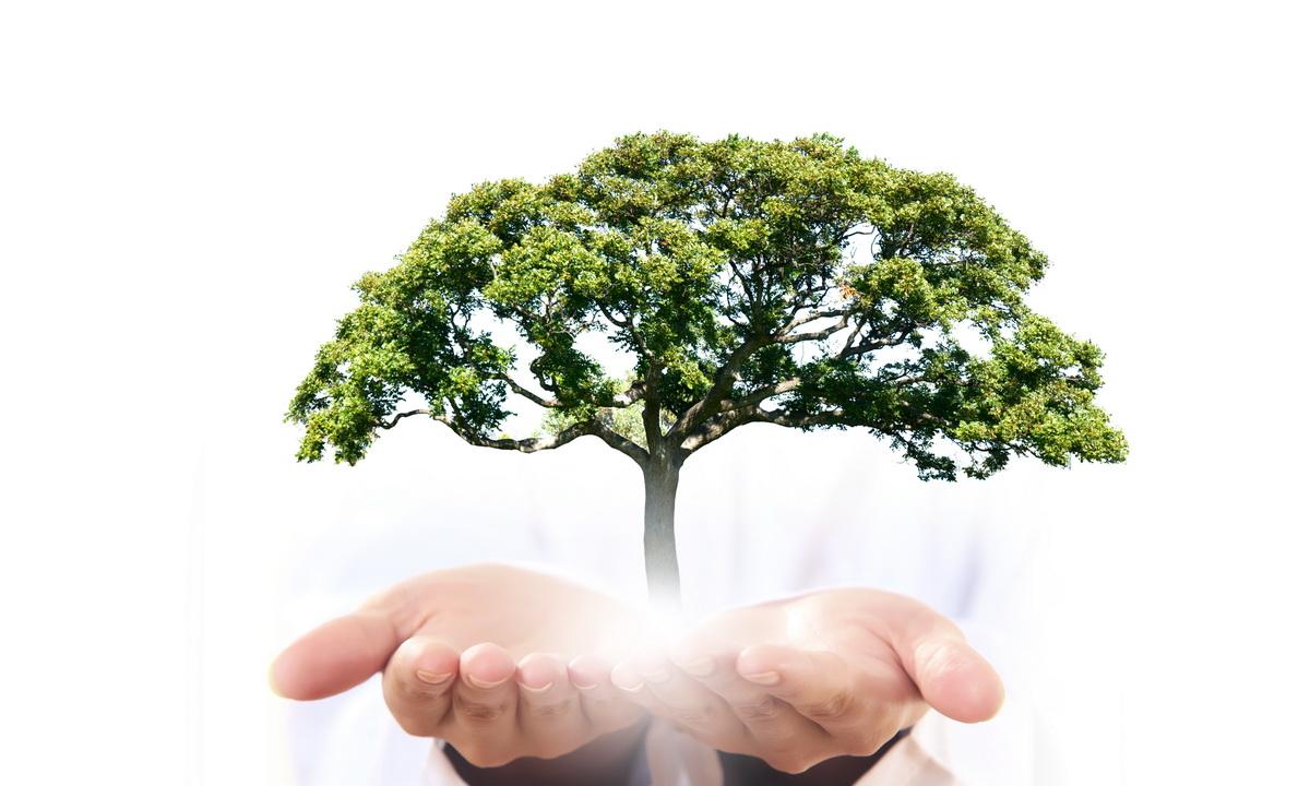 «Дерево за макулатуру. Сибирь»